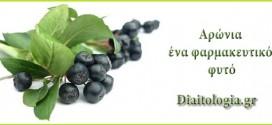 Αρώνια η μελανόκαρπος- Ο καλλιεργήσιμος θάμνος που βρίσκεται στις πρώτες θέσεις κατάταξης των φαρμακευτικών φυτών