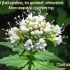 Η βαλεριάνα, το φυσικό υπνωτικό. Είναι ασφαλής η χρήση της;
