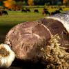 Ο καβουρμάς : ένας μεζές με λίγες θερμίδες