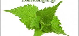 Η τσουκνίδα :Το φυτό με τις 60 διαφορετικές θεραπείες