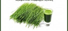 Τα φύτρα καρπών και σπόρων, εξαιρετικοί σύμμαχοι υγείας
