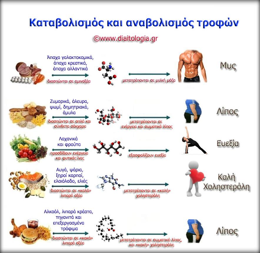 Καταβολισμός και αναβολισμός τροφών
